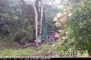 辽宁挖出140岁蛇精