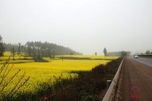 罗平飞机场、国道油菜花