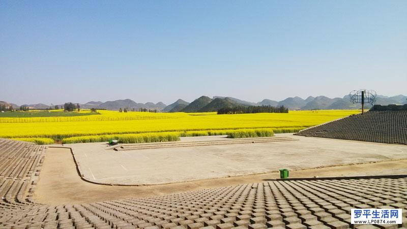 2015罗平飞机场油菜花节主会场旅游交通及其景点