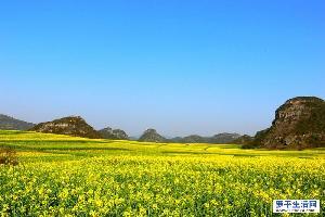 罗平油菜花拍照摄影最佳观景点