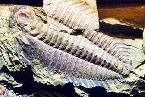 玉溪帽天山动物化石群